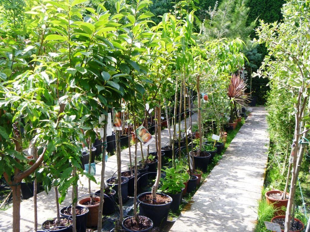 Empresas de flores plantas arboles y viveros tattoo for Viveros y plantas