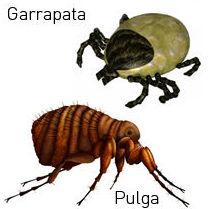 pulgas y garrapatas