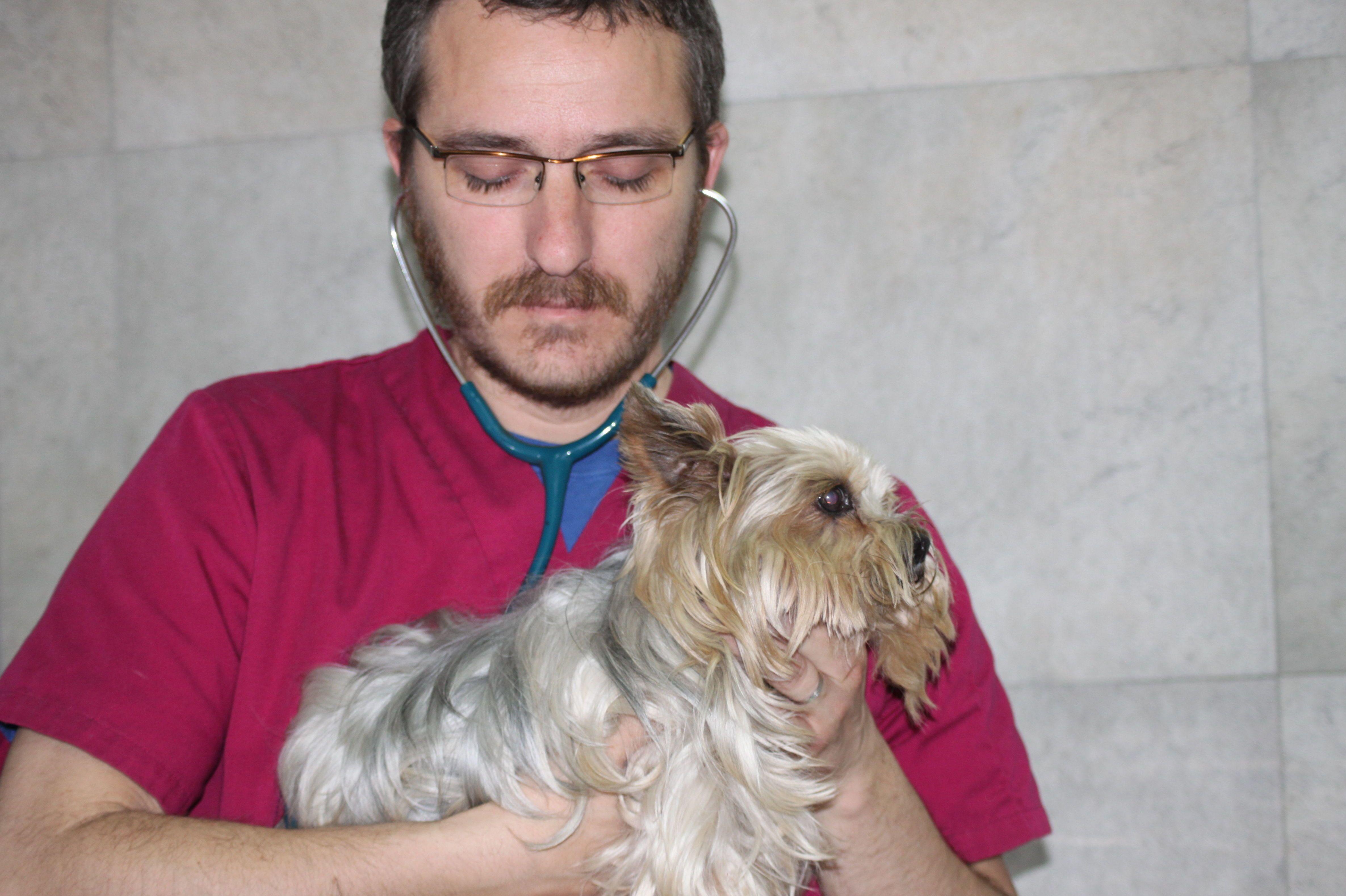 Veterinario Exóticos: Veterinarios Animales Exóticos Valencia