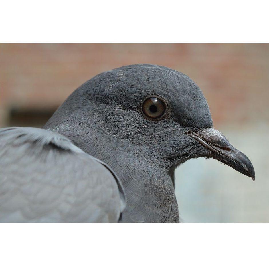 Servicios especializados de control de aves en Barcelona