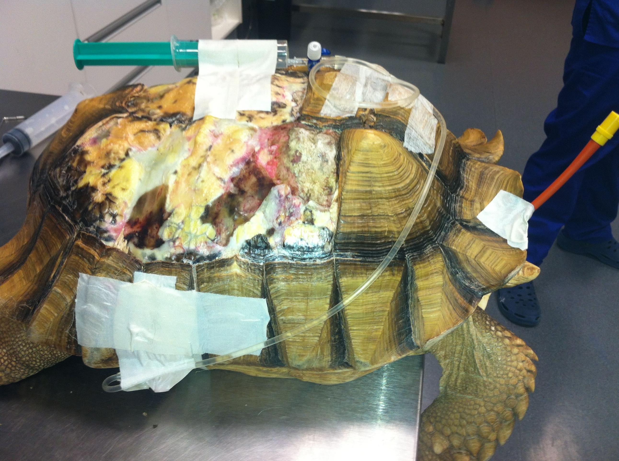 Hospitalización: ¿Qué hacemos? de Clinica Veterinaria Tot Exotics Zoolandia