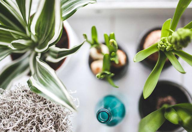 Plantas naturales para decoración