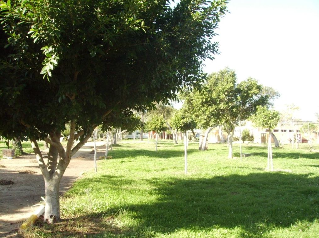 Parcelas 45 m2 Camping Faro Trafalgar