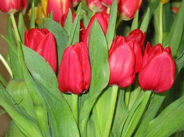 Servicios de floristería en Navarra