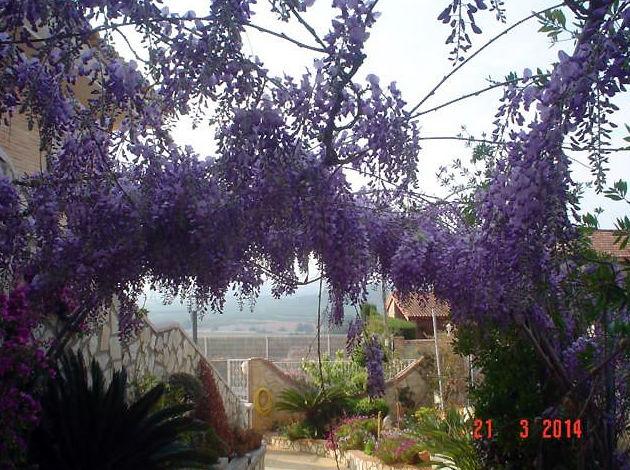 de jardines de chalets y en valencia