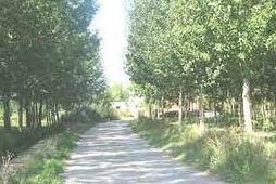 Camino vega