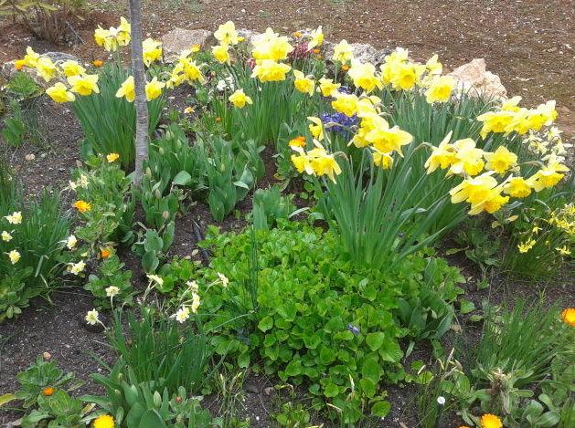 Plantar bulbos en oto o - Bulbos de otono ...