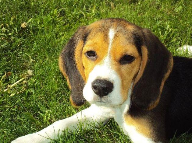 Alimentación para mascotas, complementos y peluquería en Leioa