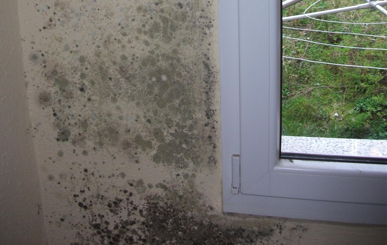 Soluciones para humedades en paredes Humedades en las paredes