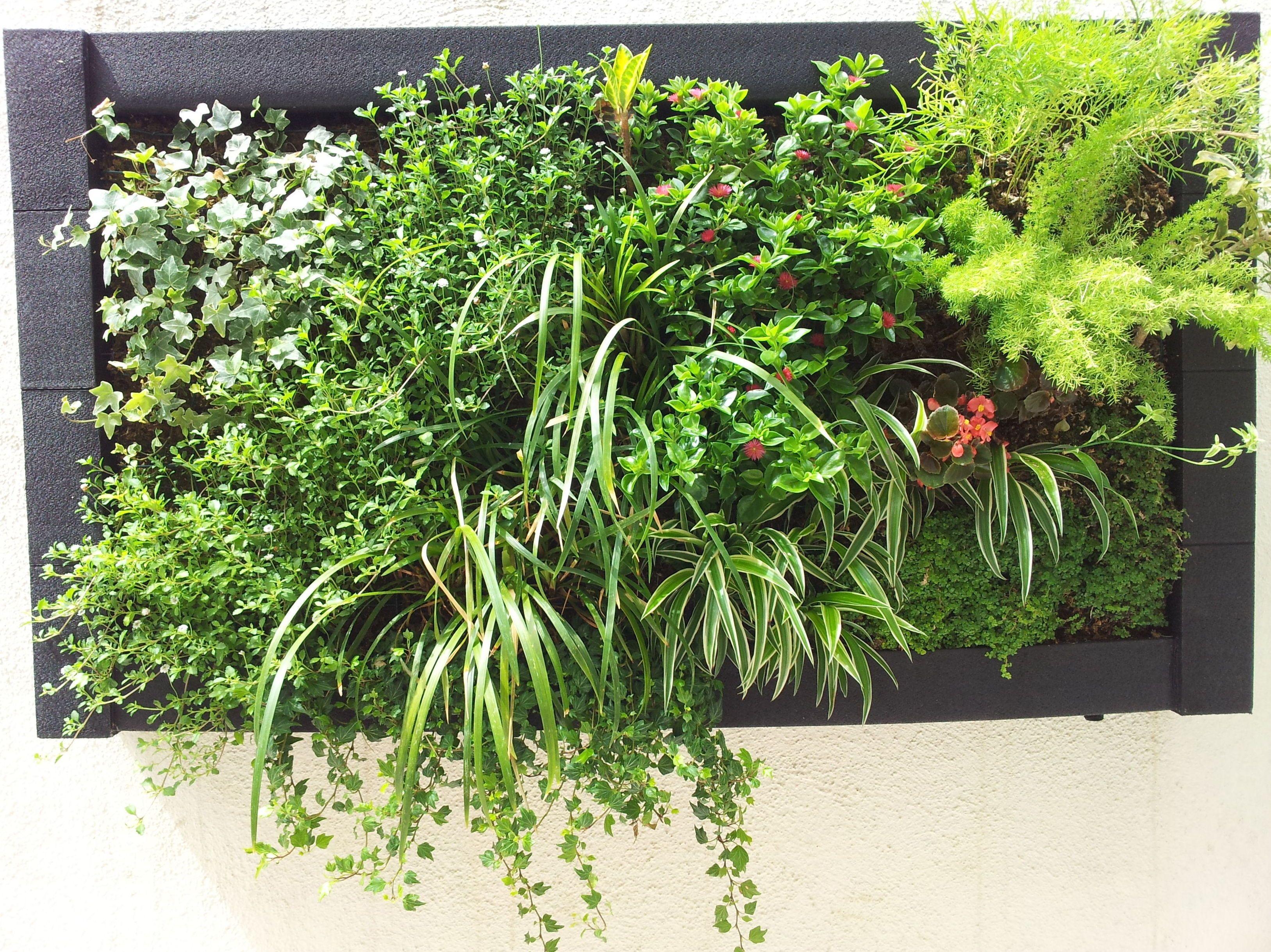 cuadros vegetales y estanques de jardn en barcelons