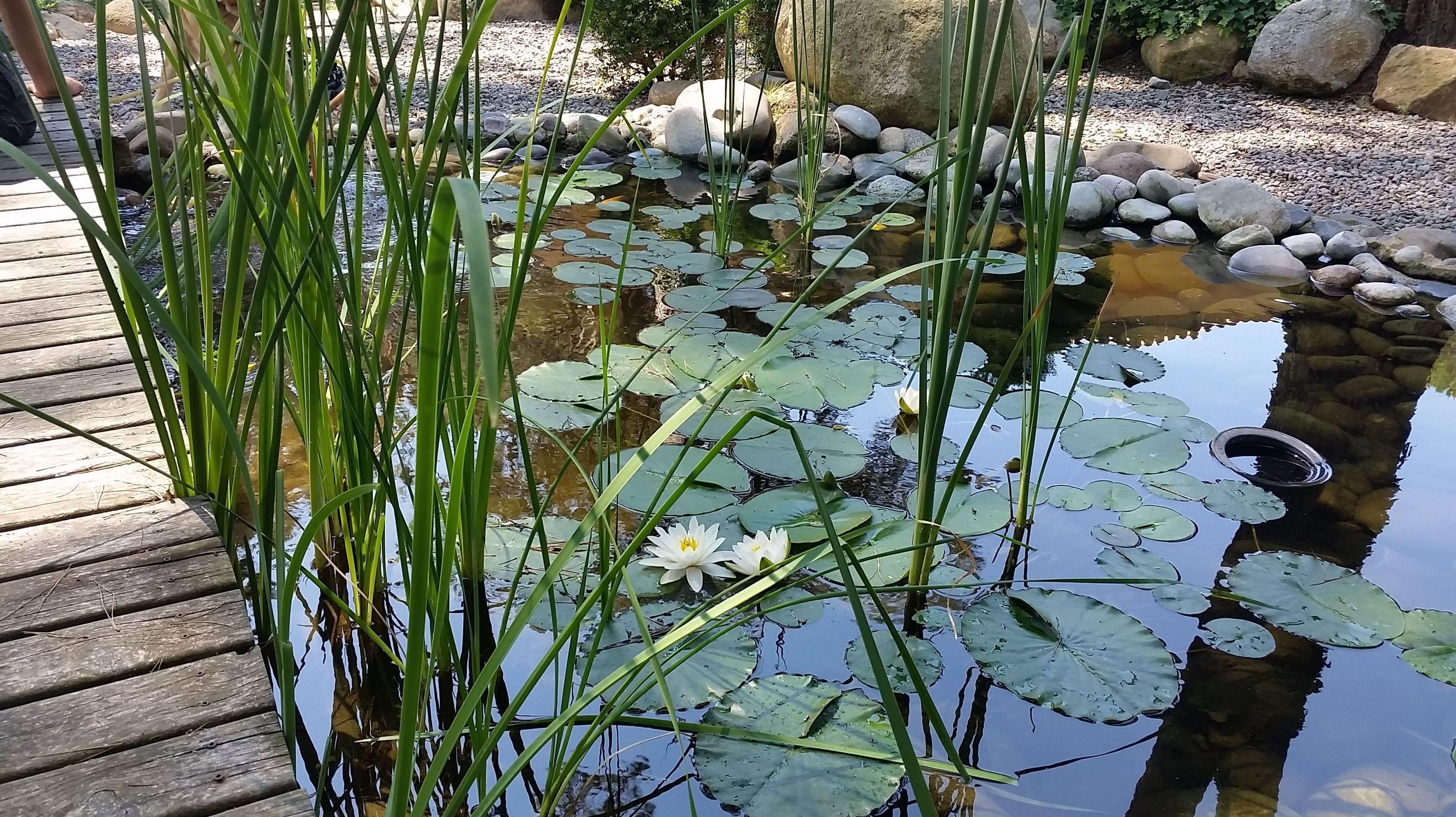 Estanques de jard n en el baix llobregat aquaplant for Fotos estanques