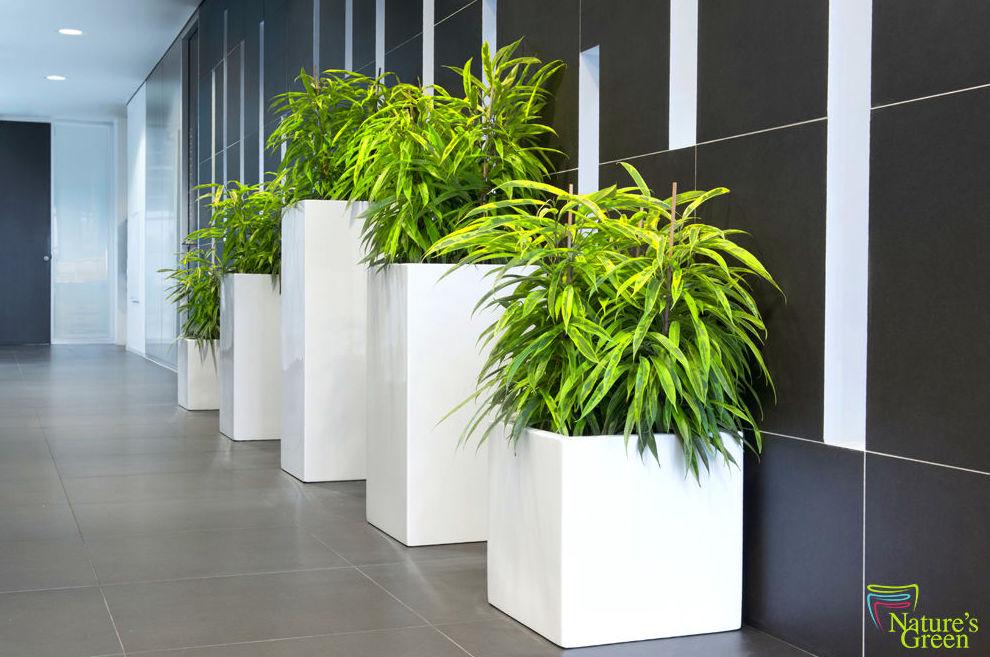nueva lnea de jardineras natureus green