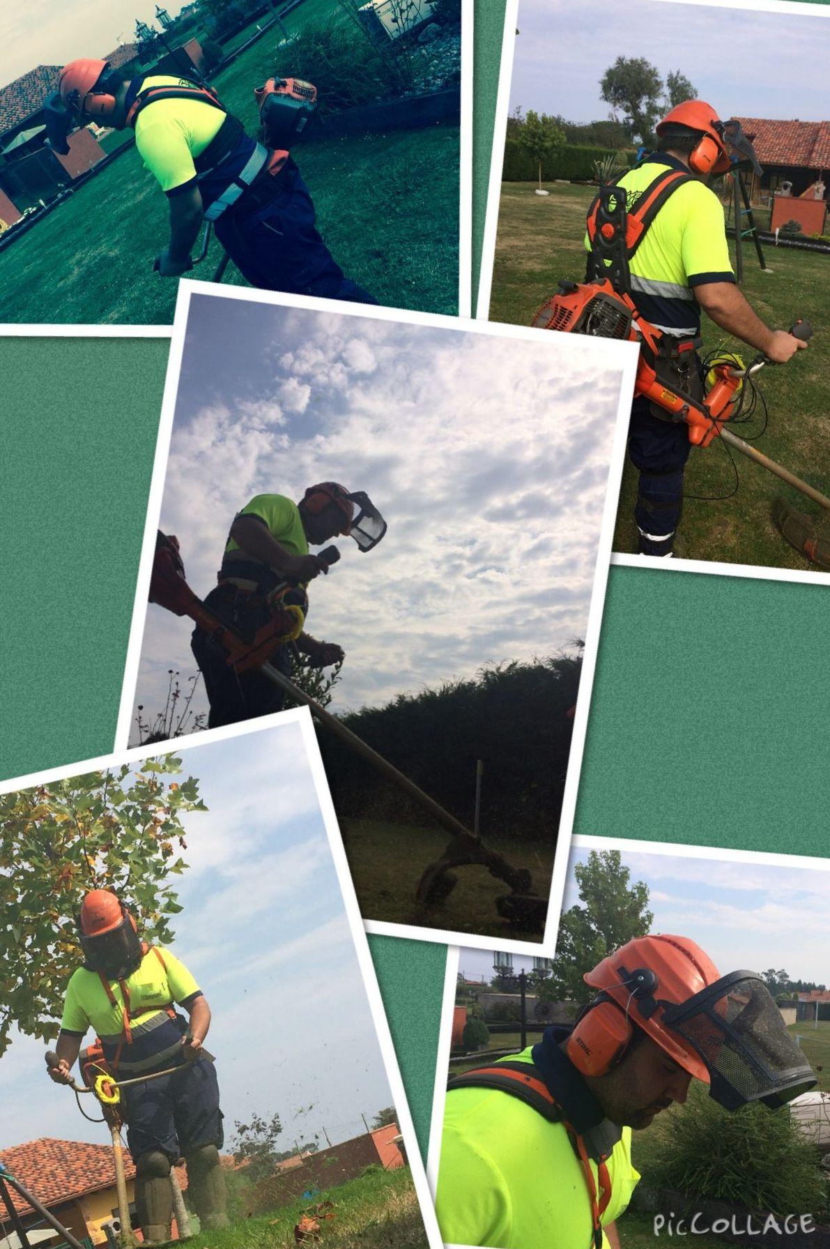 Mantenimiento integral de zonas verdes en Asturias