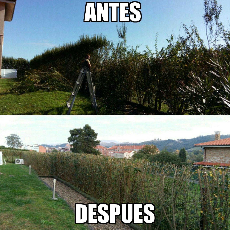 puesta a puntos de jardines en Gijón - Asturias