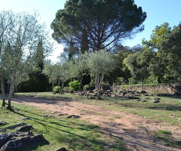 Limpiezas forestales: Servicios  de Jardinería Garrotxa