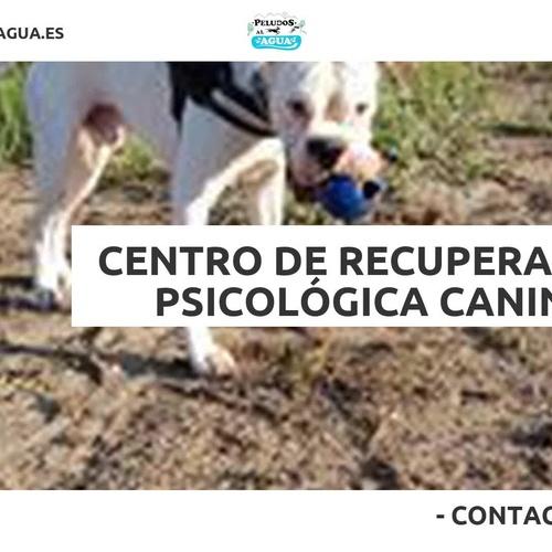 Guardería canina Tres Cantos | Peludos Al Agua