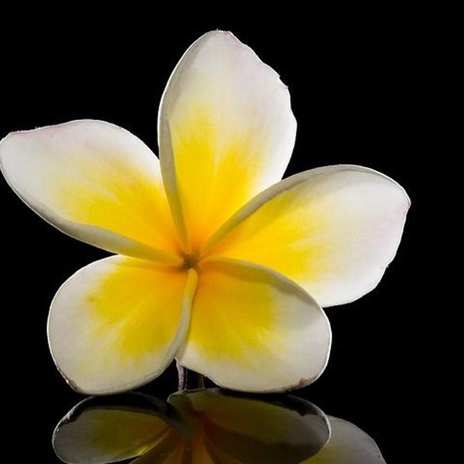 ¿Cómo decorar tu hogar con flores?