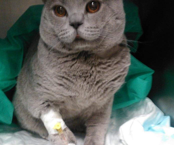 Tomás, recuperándose tras pasar por el quirófano.