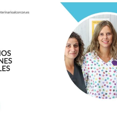 Vacunas para animales en Alcorcón | Veterinario Alcorcón