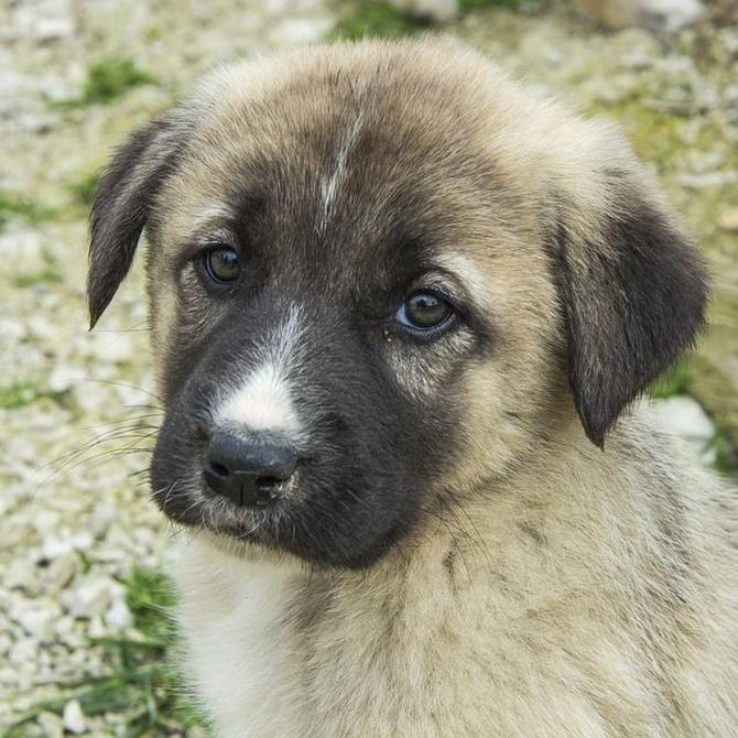 Los parásitos más habituales en perros (I)
