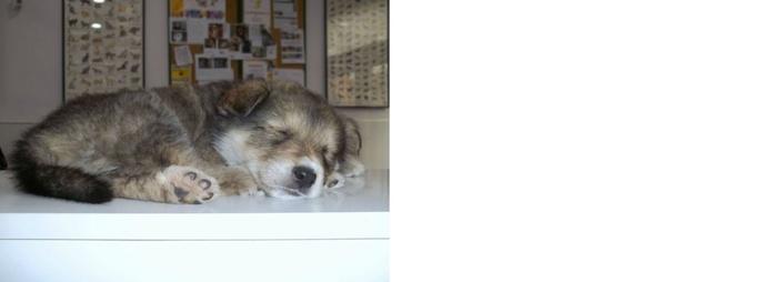 Especialidades veterinarias: Servicios de Clínica Veterinaria Llíria