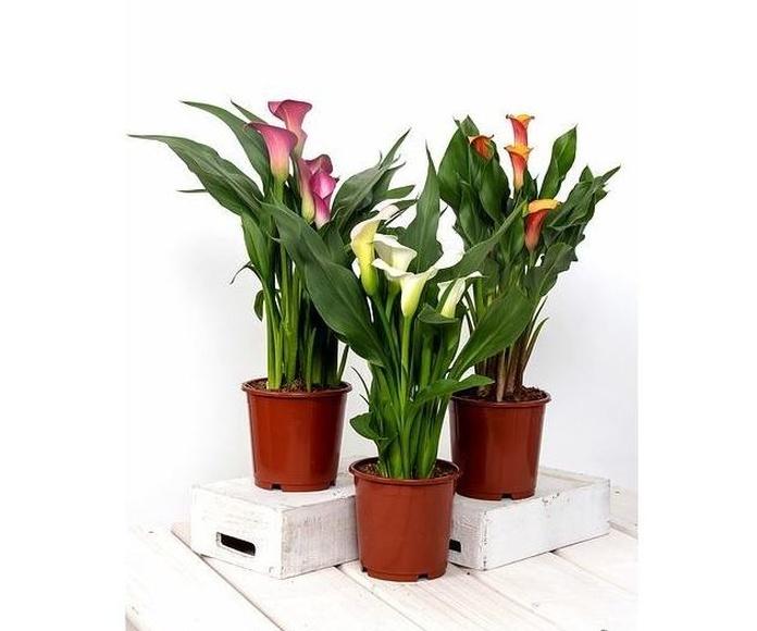 Plantas decorativas: Productos y servicios de Floristeria rosella