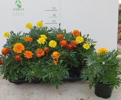 Nuestra preciosa planta disponible, para la semana 21