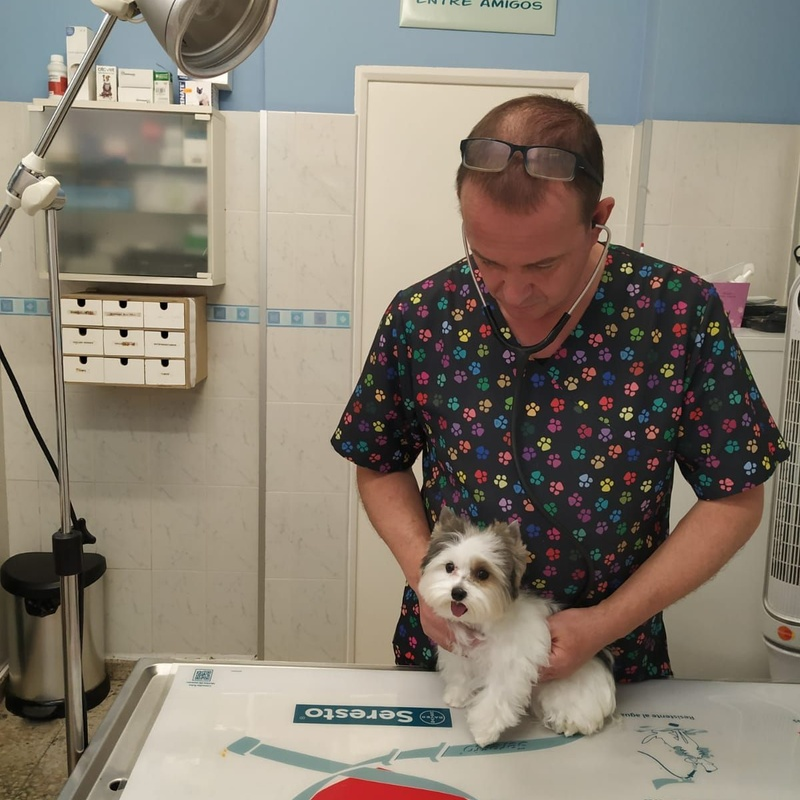 Medicina veterinaria preventiva: Servicios de Clínica Veterinaria Dog And Cat