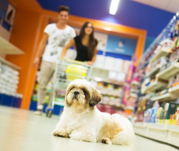 Accesorios para mascotas: Productos y servicios de Floristería Miranda