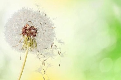 La alergia primaveral también puede afectar a la salud bucodental.
