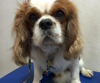 Tienda especializada: Tratamientos y servicios de Clínica Veterinaria Animals Vet