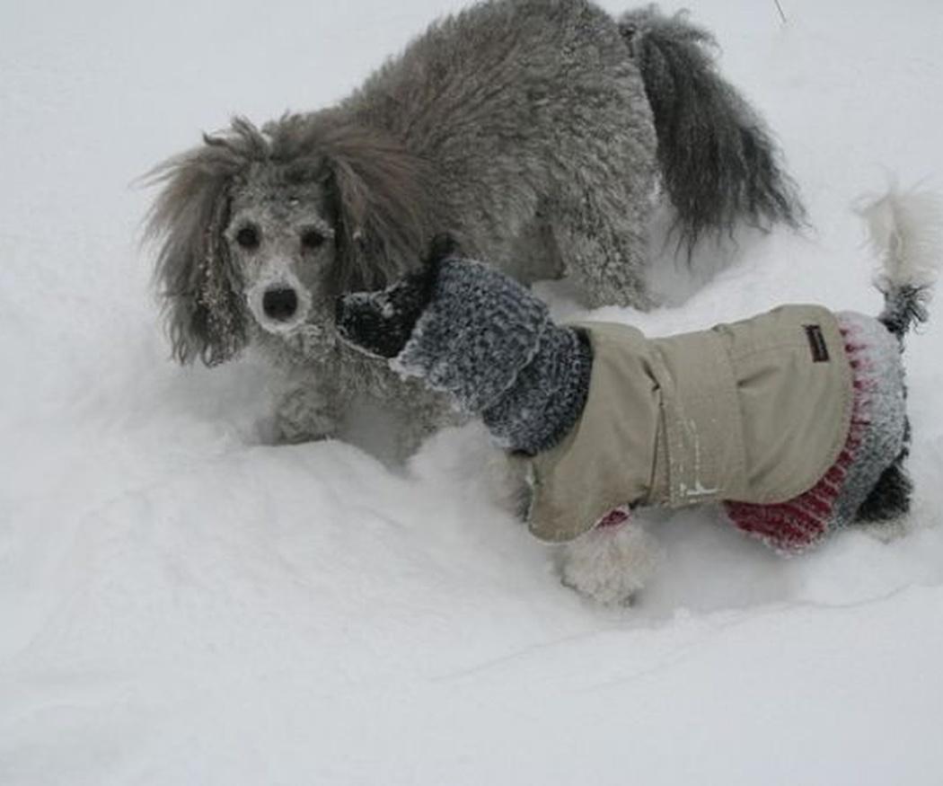 ¿Los perros pasan frío en invierno?