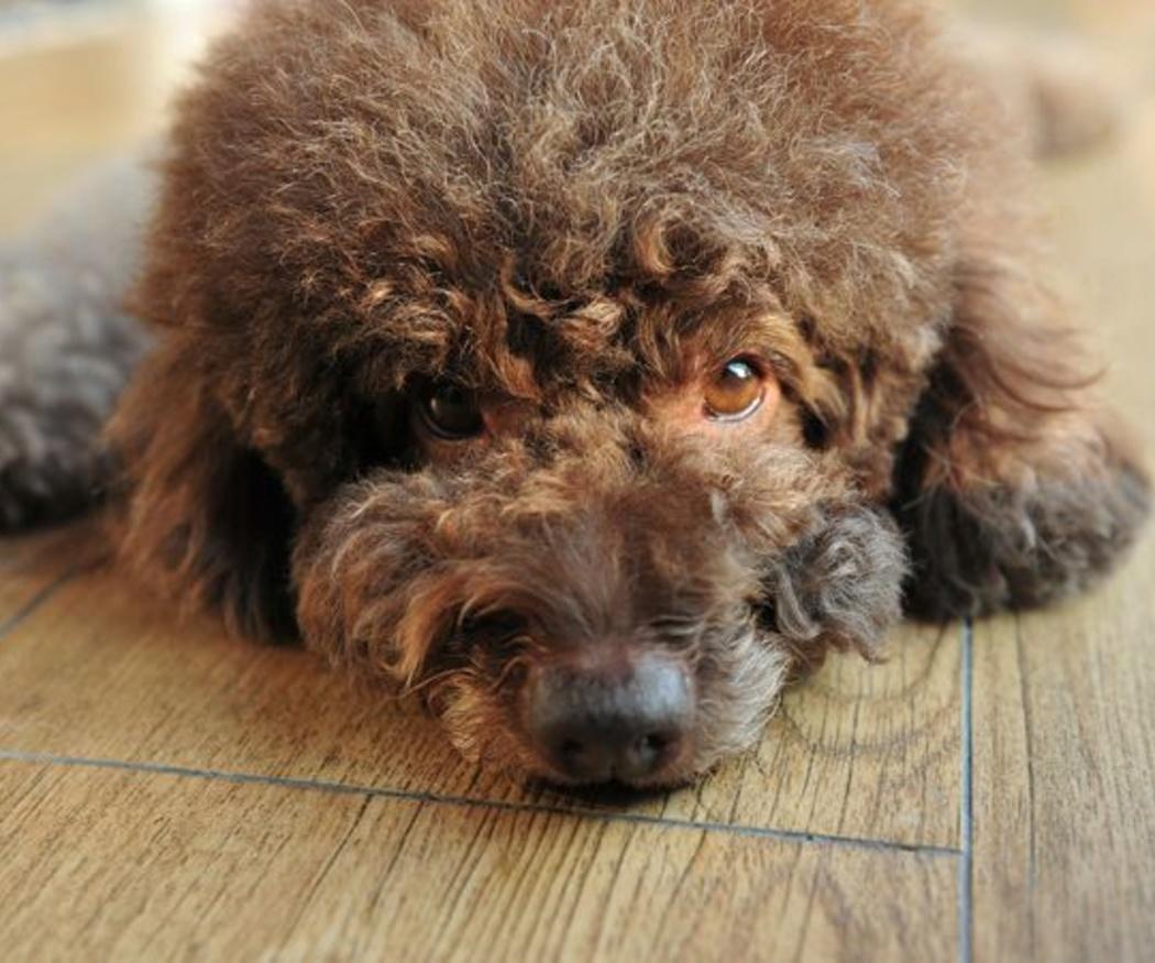 ¿Cómo puede la homeopatía ayudar a tu mascota?