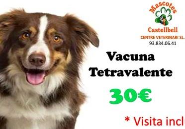Vacuna Tetravalente en Mascotes Castellbell centre Veterinari S.L