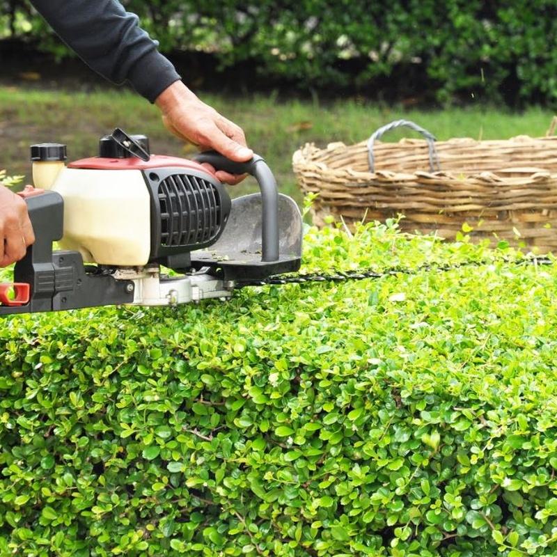 Podas: Servicios de Jardines Salvador