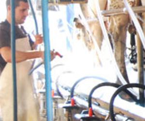 Galería de Productos lácteos en Nueva Jarilla | Lácteos Artesanía