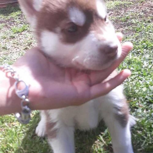 Venta de mascotas Zaragoza | Shira Mascotas