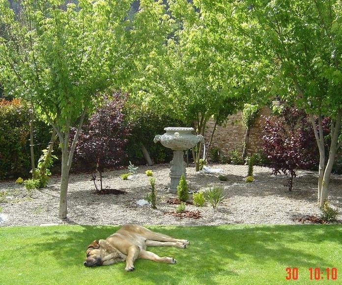 Mantenimiento de jardines: Nuestros Trabajos de Todojardín