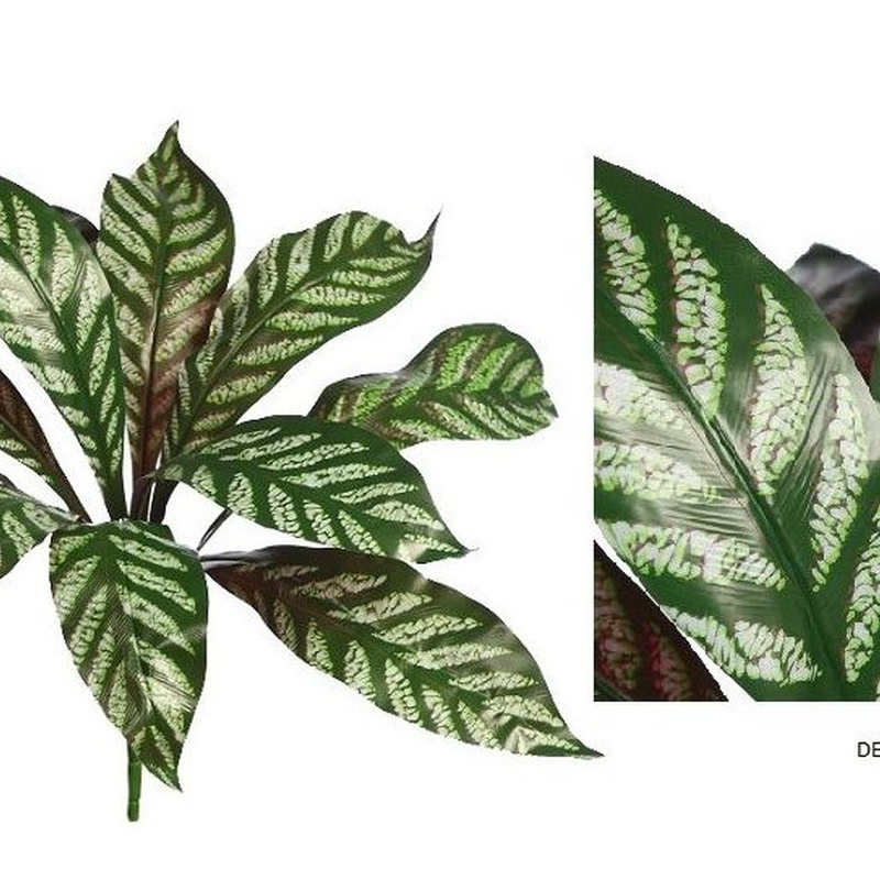 PLANTA DE APELANDRA  (D.55x H.40CM) REF: AD0772.10 PRECIO: 2,50€