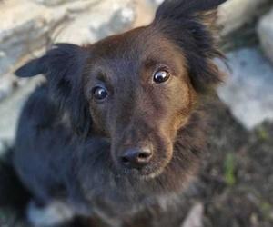 Can Exprés servicio veterinario a domicilio Zaragoza, Chaman perrito muy inteligente y cariñoso, tubo enfermedad por garrapatas(Erlichia) de la que se recuperó completamente. Excelente compañero de juegos de Yara y su família.