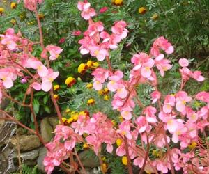 Navaflor - Plantas