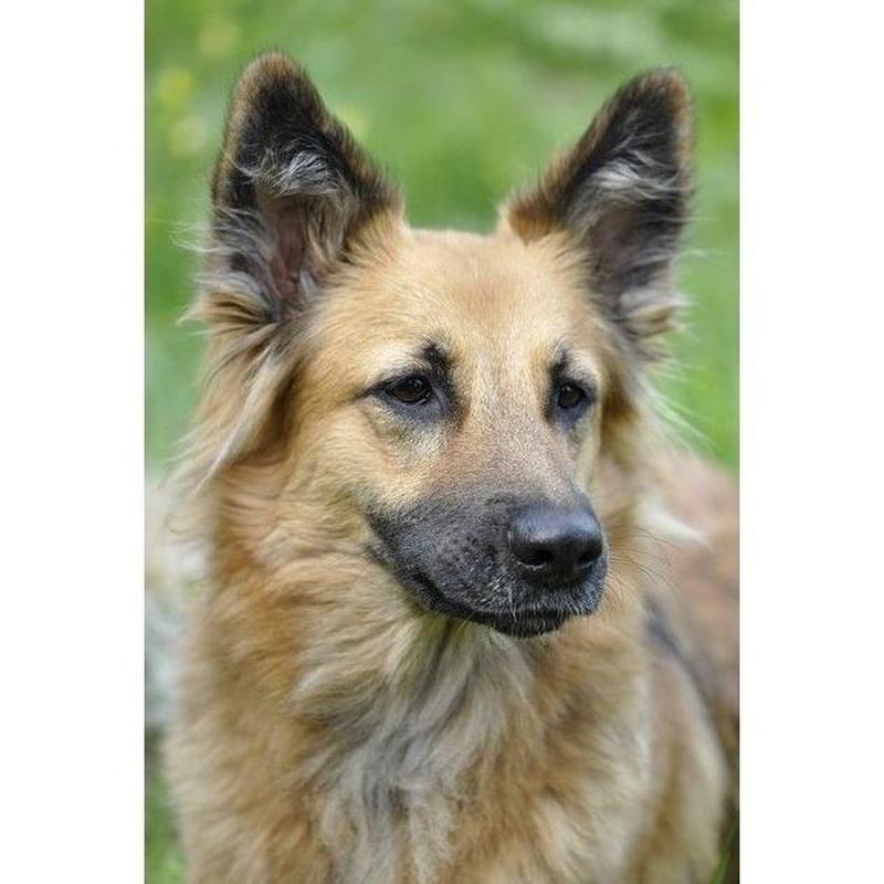 Peluquería canina: Especialidades de Clínica Veterinaria Albeitar