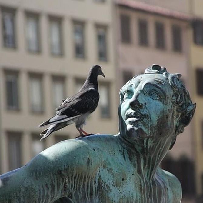 ¿Qué daños causan las palomas?