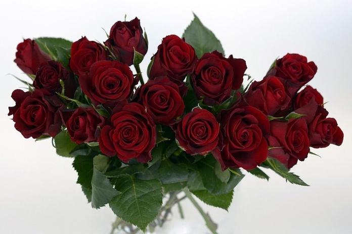 Flores de San Valentín: Servicios de Floristería, Perfumería, Pajarería Herboflor