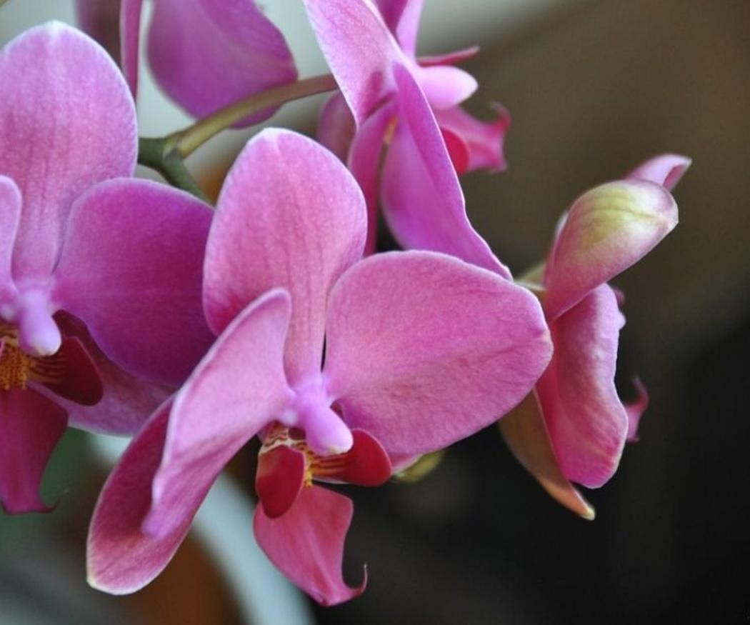 Cuidados básicos para las orquídeas