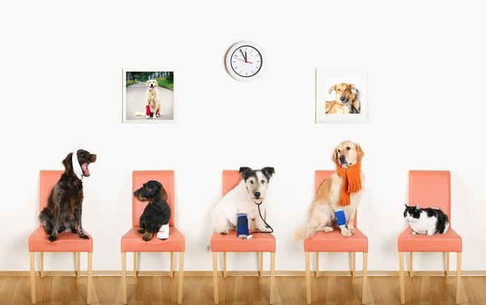 Productos veterinaria: Productos y Servicios de Farmàcia  Olivella