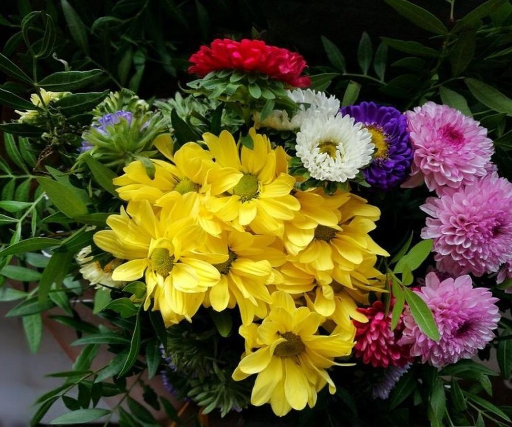 Crisantemo, la flor del día de Todos los Santos