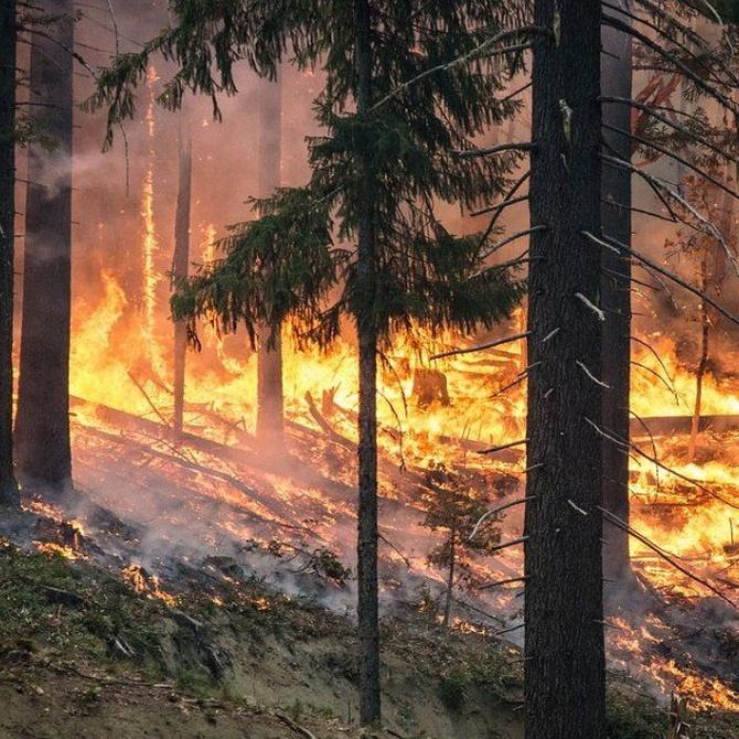 ¿Cómo prevenir incendios forestales?