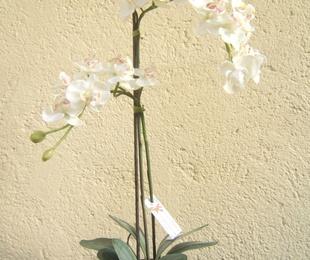 Orquídea dos tallos en blanco
