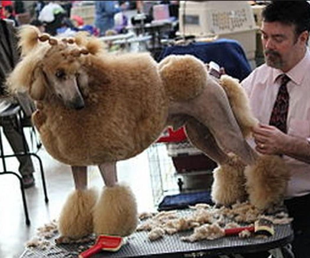 Las funciones de los peluqueros caninos